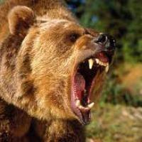 Smokey the Bear: Ecoterrorist